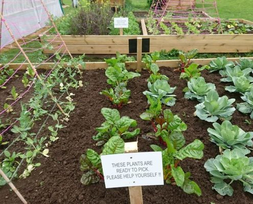 Raised beds at the Community Garden