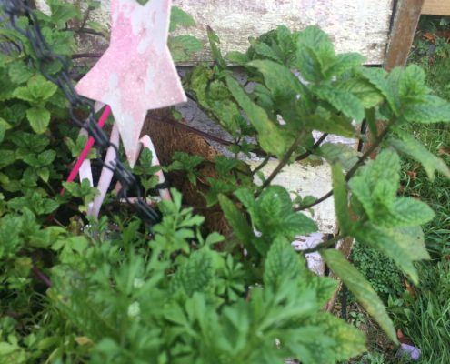 mint in the fairy garden