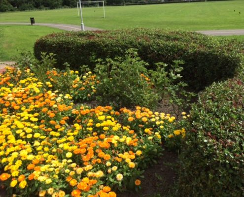 Flower beds at Rosyth Parkgate Institute